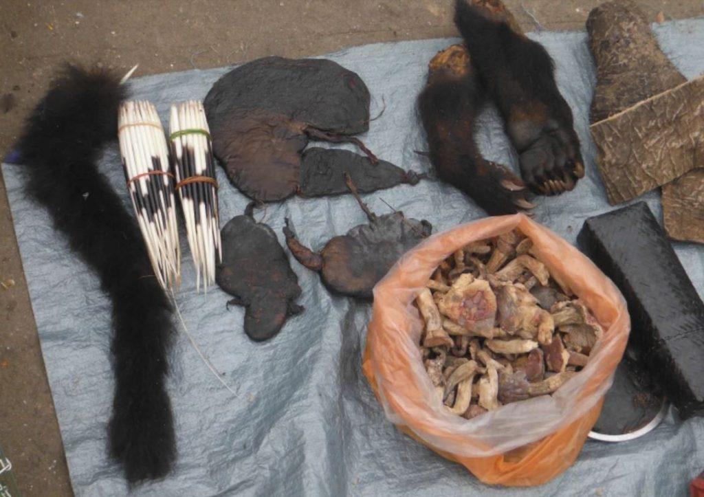 การค้าสัตว์ป่า เฟื่องฟูในแม่น้ำโขง การศึกษาใหม่โดย TRAFFIC กลุ่มที่ติดตามการค้าสัตว์ป่าอย่างผิดกฎหมาย ได้พบชิ้นส่วนและผลิตภัณฑ์จากสัตว์