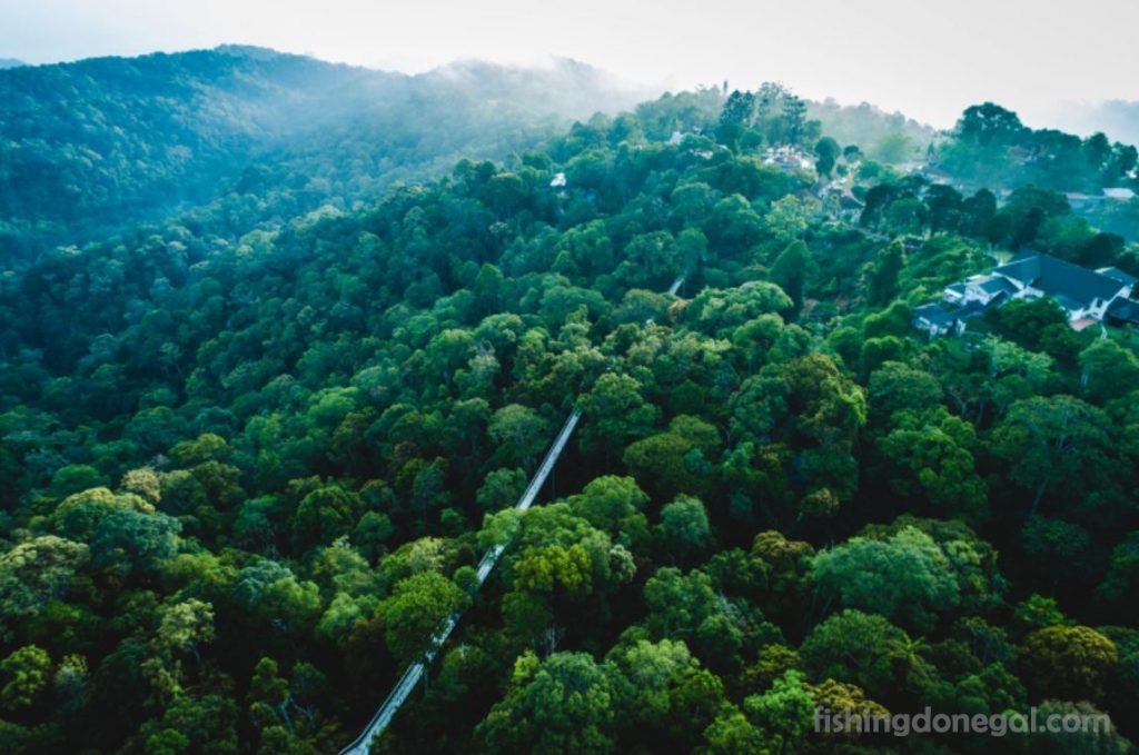 Colonial hill กลายเป็นเขตสงวนชีวมณฑลของมาเลเซีย